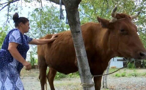 Жительнице Беслана подарили корову