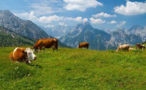 В горах Северной Осетии появится агродеревня