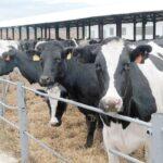 В Северной Осетии увеличилось производство продукции животноводства